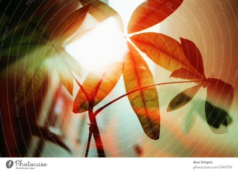 Nature Red Plant Summer Leaf Colour Autumn Moody Bright Growth Decoration Warm-heartedness Illuminate Analog Exotic Surrealism