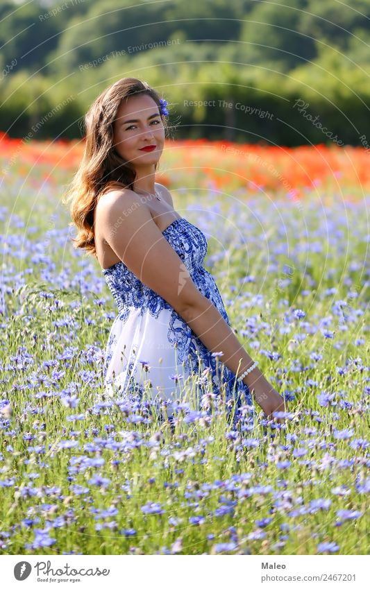 In the cornflower field Cornflower Woman Youth (Young adults) Young woman Daisy Family Field Girl Blue Background picture Beautiful Blossom Bouquet Colour Day