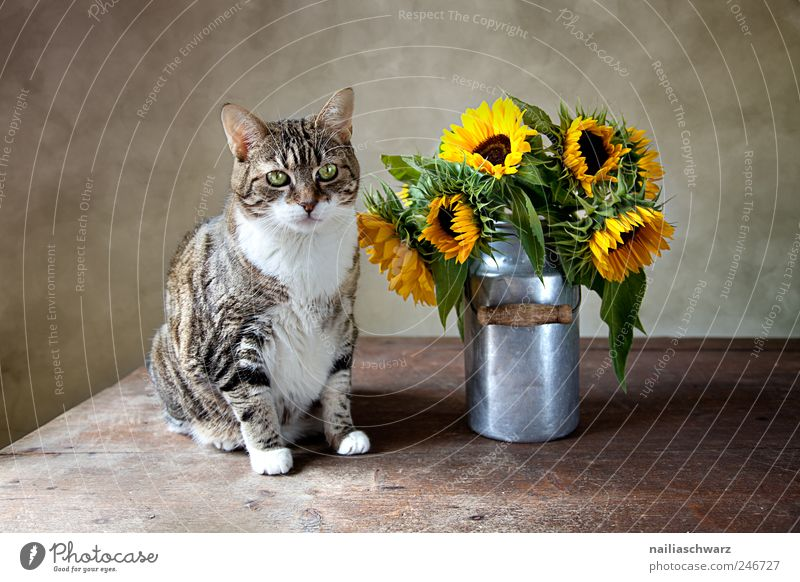 Nature Plant Summer Flower Animal Yellow Wood Cat Blossom Metal Brown Gold Sit Esthetic Observe Still Life