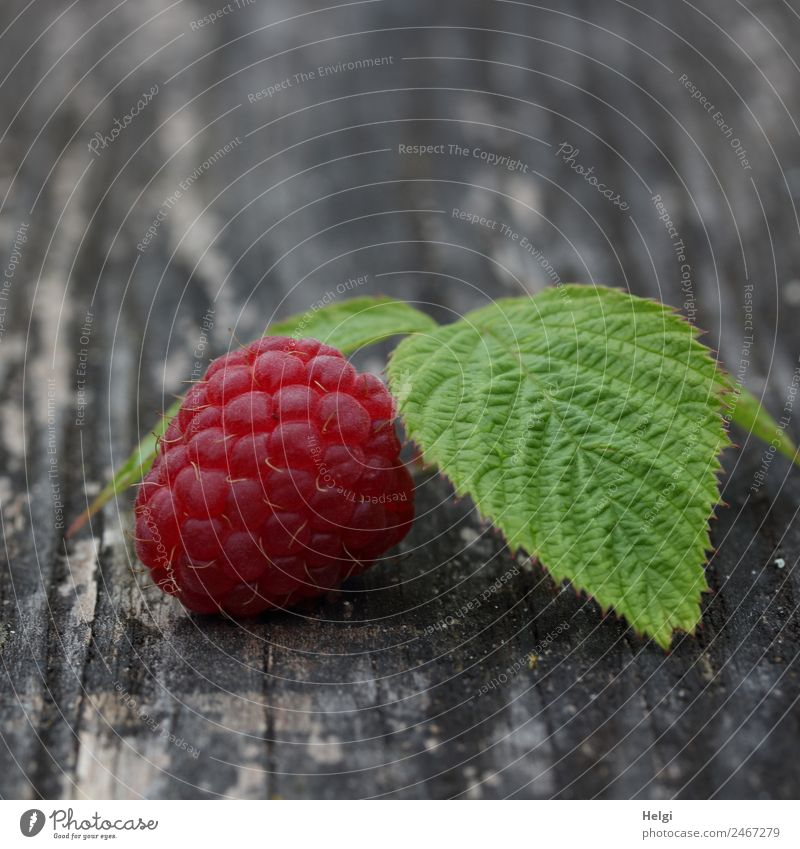 delicious fruit Food Fruit Raspberry Raspberry leaf Nutrition Organic produce Vegetarian diet Leaf Wood Lie Esthetic Fresh Healthy Delicious Natural Gray Green
