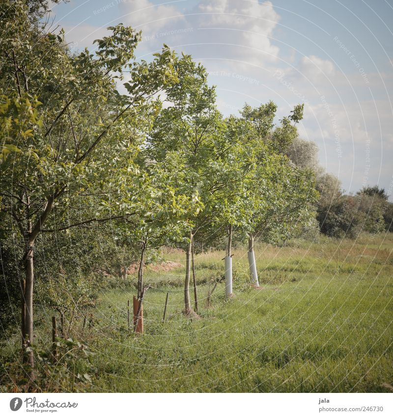 Sky Nature Tree Green Blue Plant Grass Environment Natural Foliage plant Agricultural crop Fruit trees