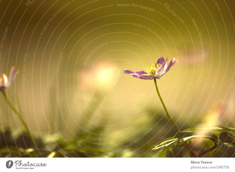 spring memoirs Nature Plant Spring Flower Leaf Blossom Garden Meadow Blossoming Growth Bright Near Natural Yellow Green Violet Spring fever Beginning Emotions