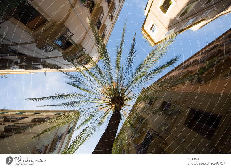 Sky Vacation & Travel House (Residential Structure) Architecture Building Facade Large Perspective Living or residing Uniqueness Exceptional Spain Palm tree Downtown Exotic Summer vacation