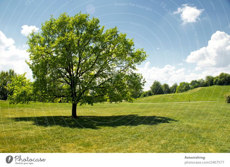 Sky Nature Old Summer Blue Plant Green Landscape White Tree Clouds Environment Meadow Grass Park Horizon