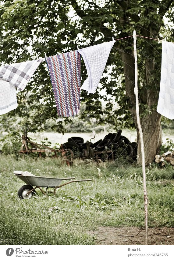 Country Life II Landscape Plant Summer Tree Meadow Hang Authentic Cleanliness Purity Laundry Clothesline Dry Wheelbarrow Car tire Towel Subdued colour