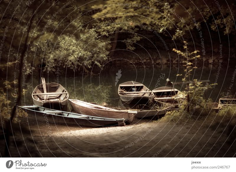 fisher idyll Nature Water Sunlight Summer Forest River bank Fishing boat Old Retro Brown Green Leisure and hobbies Idyll Calm Motor barge Paddle Old Rhine