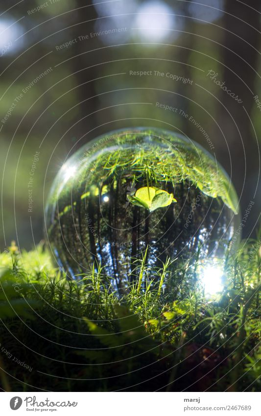 stands in the woods, but on his head Nature Plant Moss Cloverleaf Glass Glass ball Illuminate Simple Green Purity Hope Loneliness Discover Smooth Colour photo