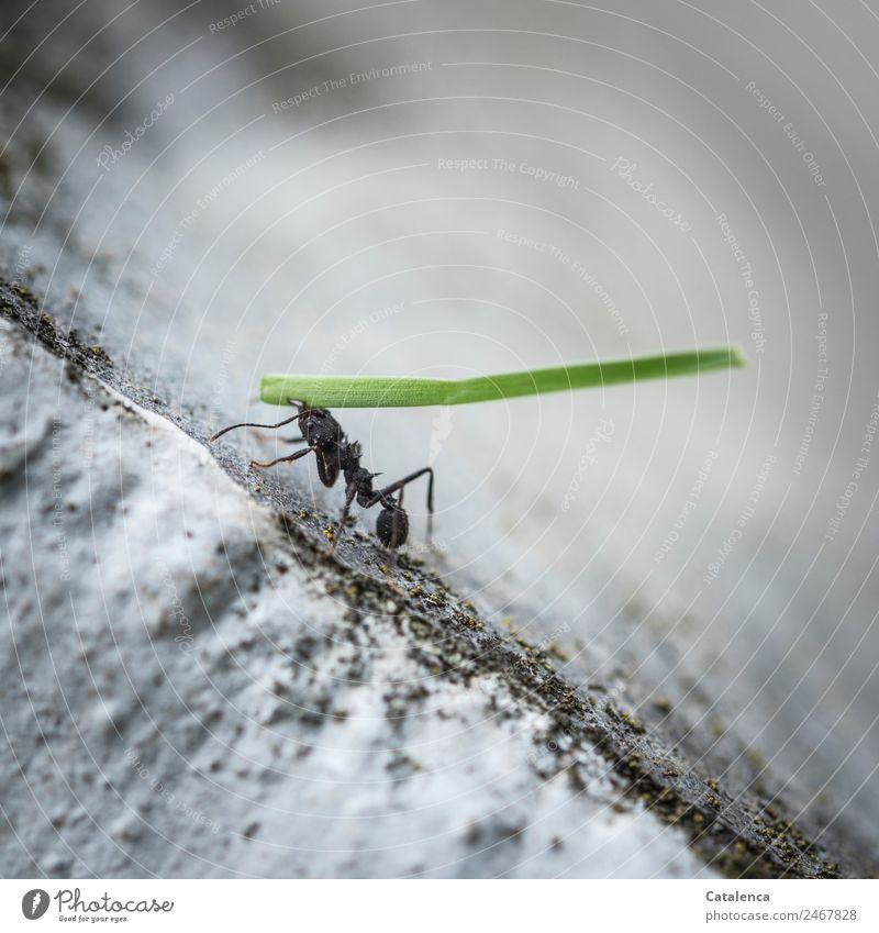 Life's a way of life to slave away. Plant Animal Summer Grass Blade of grass Garden Stairs Insect Ant 1 Work and employment Crawl Thin Small Strong Gray Green