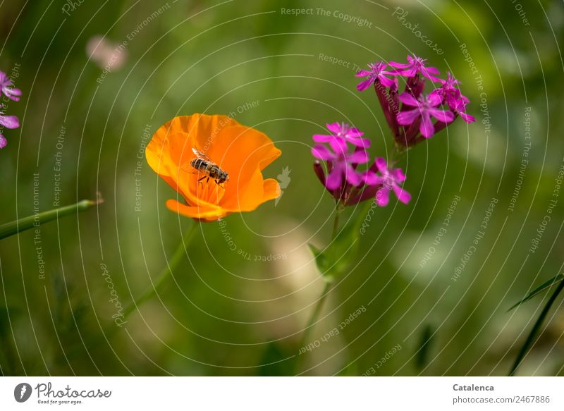 Nature Summer Plant Beautiful Green Flower Animal Leaf Environment Blossom Meadow Grass Garden Orange Pink Moody