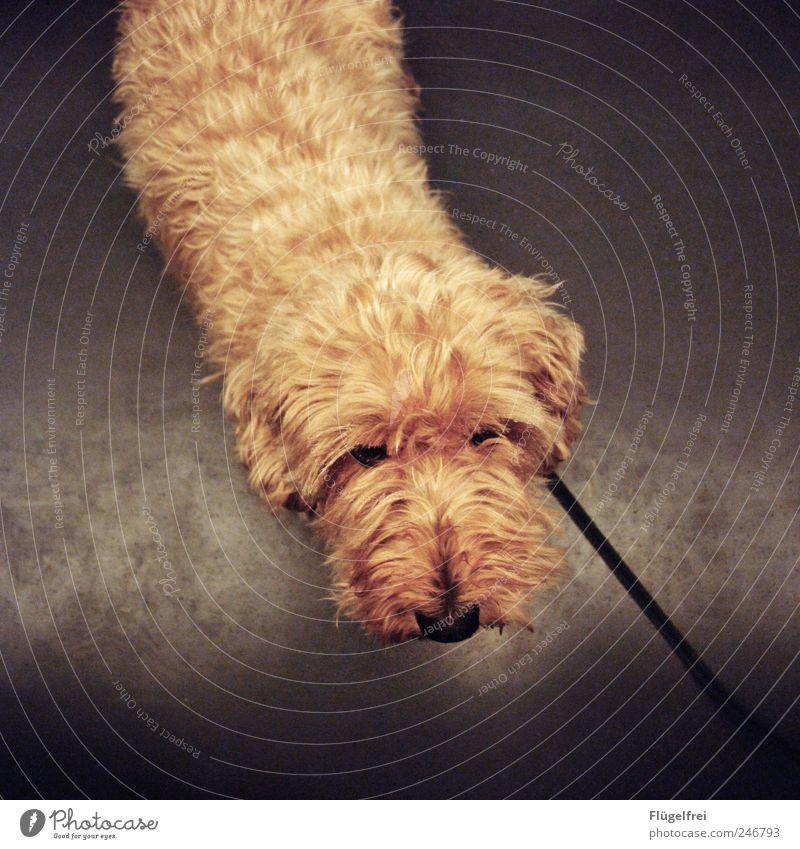 Eyes Animal Dog Small Railroad Sweet Soft Pelt Pet Snout Beige Dog lead Beg