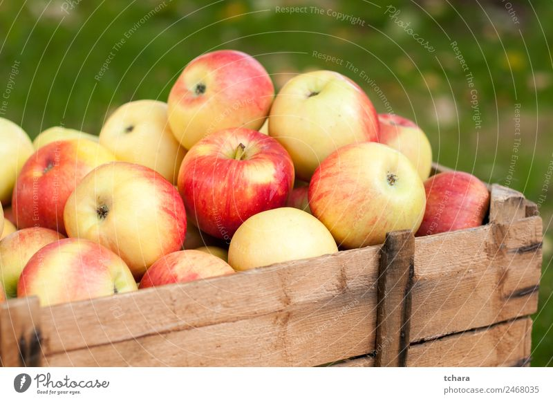Ripe apples Fruit Apple Nutrition Diet Nature Autumn Tree Leaf Container Packaging Wood Old Fresh Delicious Natural Yellow Gold Green Red Colour Harvest Crate
