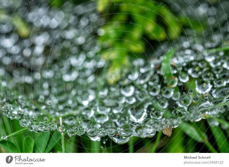 Drops in the spider's web Environment Nature Water Drops of water Fluid Wet Natural Green Dew Colour photo Exterior shot Close-up Macro (Extreme close-up)