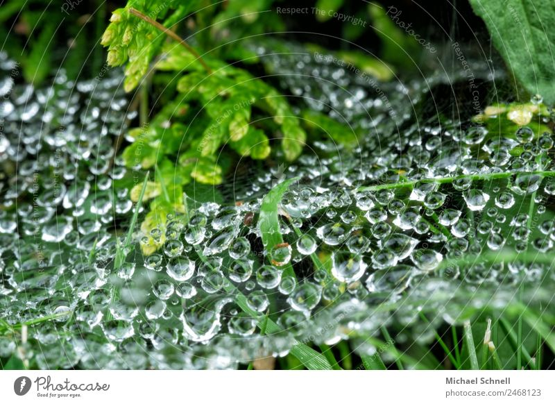 Drops in the spider's web Environment Nature Plant Water Drops of water Rain Grass Bushes Meadow Fluid Wet Natural Green Dew Colour photo Exterior shot Close-up
