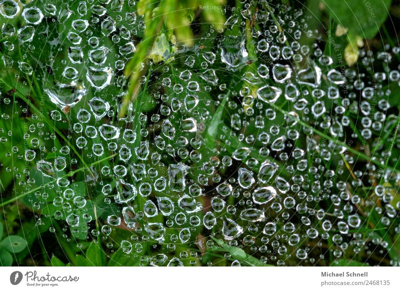Drops in the spider's web Environment Nature Water Drops of water Rain Meadow Esthetic Fluid Natural Green Wet Dew Colour photo Exterior shot Close-up