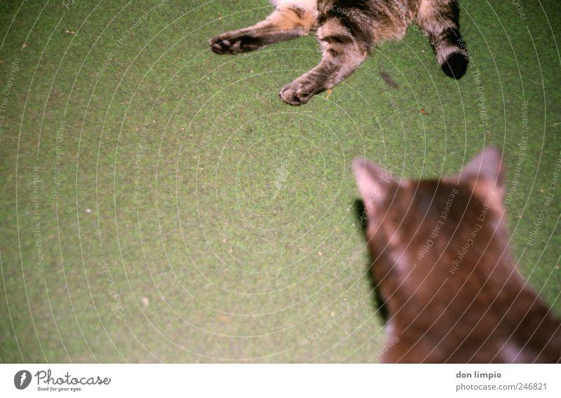 Green Animal Relaxation Dream Cat Pair of animals Sleep Lie Break Near Trashy Pet Comfortable Indifferent