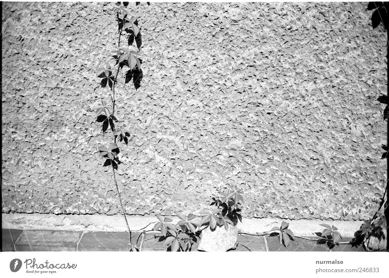 Nature Plant Life Dark Wall (building) Environment Garden Wall (barrier) Moody Art Time Flat (apartment) Facade Beginning Growth Mysterious