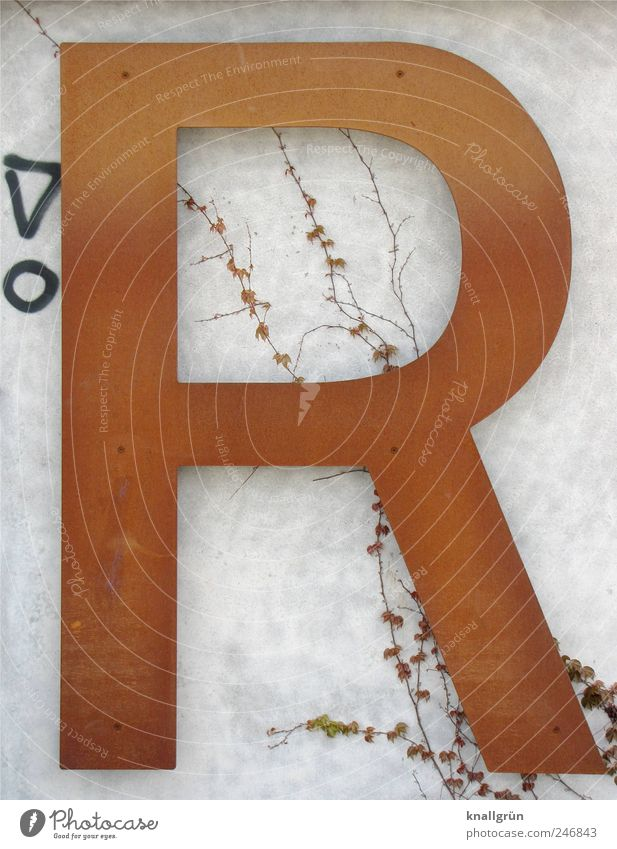 large R Plant Wall (barrier) Wall (building) Sign Characters Graffiti Communicate Large Brown Black White Art Rust Exclamation mark Tendril Virginia Creeper