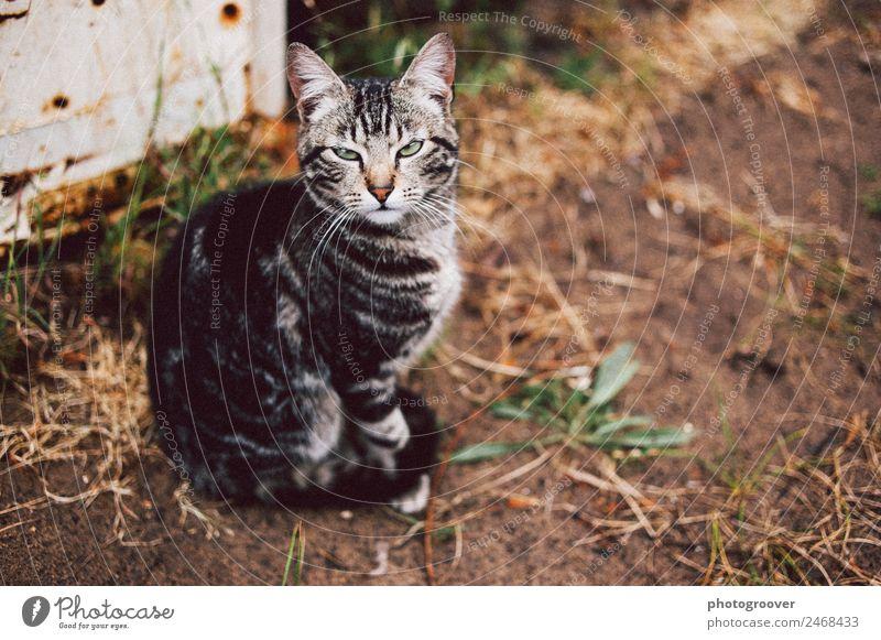 Grumpy Cat Garden Sand Pet 1 Animal Think Listening Wait Rebellious Anger Brown Gray Moody Disbelief Envy Conceited grumpy grumpy cat cat in garden cat eyes