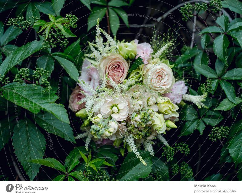 bouquet Elegant Feasts & Celebrations Mother's Day Wedding Plant Flower Bushes Rose Leaf Blossom Bouquet Ornament Emotions Happy Spring fever Trust