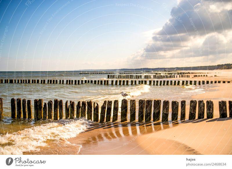 Baltic Sea beach in Poland Vacation & Travel Summer Beach Mail Nature Sand Coast Maritime Tourism groynes Old Sandy beach Surf Clouds cloud train Blue Sky