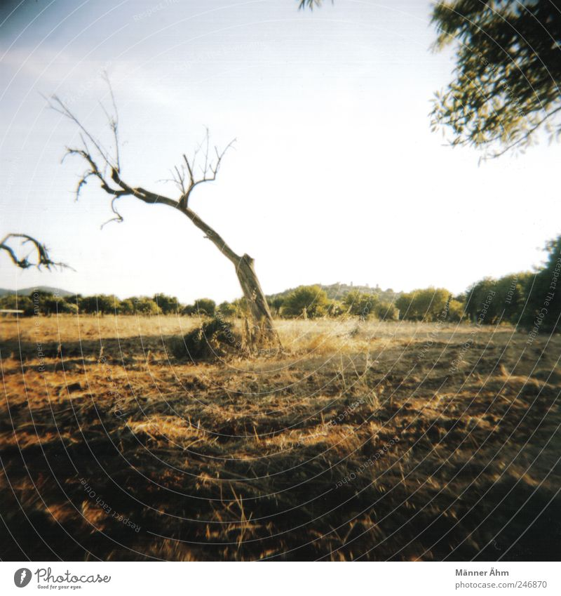 Here and there... Nature Landscape Sky Wild plant Meadow Field Old Dry Stagnating Majorca Mountain Earth Colour photo Lomography Holga Day Light Shadow Blur