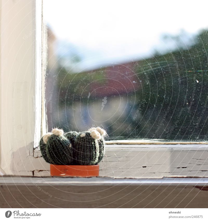 crafted Plant Cactus Houseplant Window Window pane Window frame Window board Dirty Living or residing Wool Colour photo Deserted Copy Space top Day Sunlight