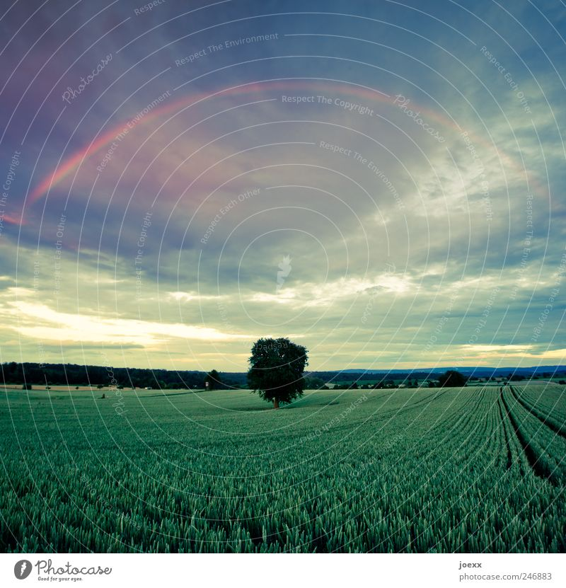 light band Landscape Sky Clouds Spring Climate Tree Agricultural crop Field Authentic Large Bright Beautiful Blue Yellow Green Red Calm Environment Rainbow