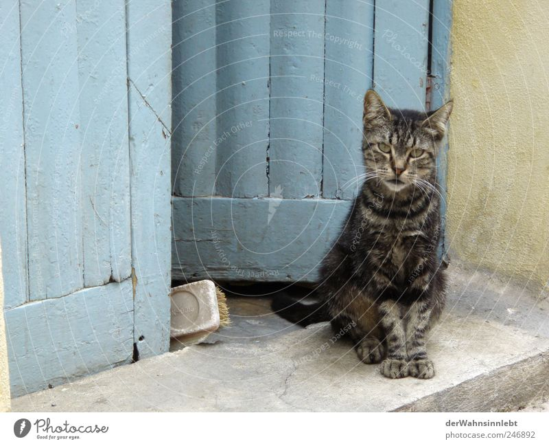 Come in, bring luck in Lipari Italy Village Door Animal Pet Cat 1 Observe Authentic Blue Contentment Love of animals Curiosity Interest Expectation Happy