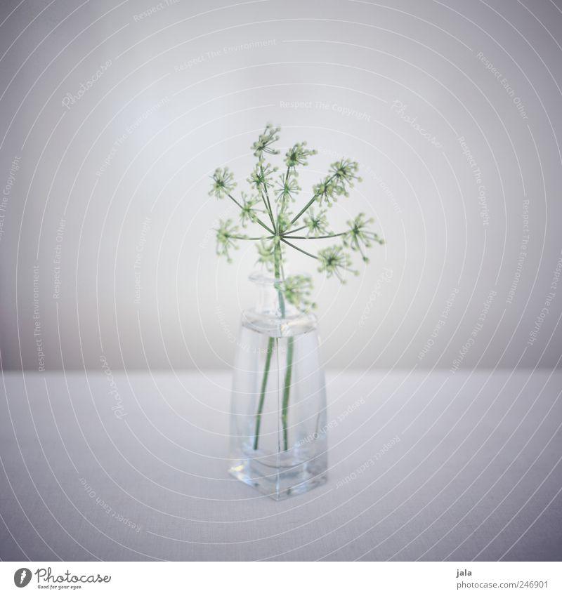 Green White Beautiful Plant Flower Gray Glass Esthetic Decoration Vase Delicate Flower vase Light green