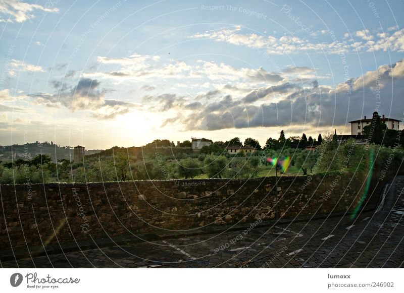 Tuscany Landscape Sun Sunrise Sunset Sunlight Summer Tree Olive tree Garden Park Meadow Florence Italy Europe Dream house Wall (barrier) Wall (building) Street