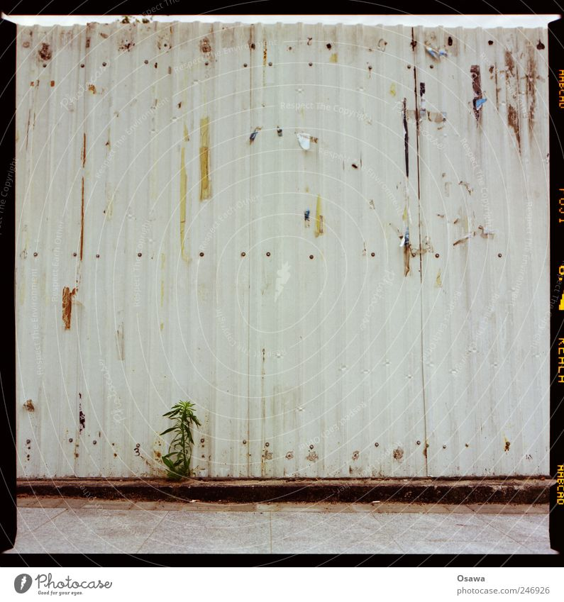 green plant Environment Nature Plant Flower Foliage plant Wild plant Wall (barrier) Wall (building) Optimism Willpower Sadness Concern Fatigue Fence enclosure