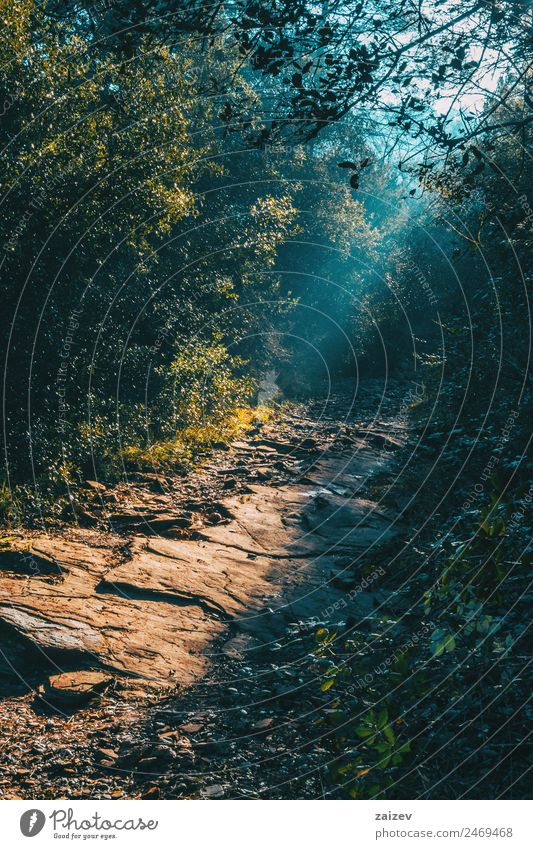Landscape with a path in the mountain lit by a ray of sunLandscape with a path in the mountain lit by a ray of sun Design Beautiful Vacation & Travel Trip