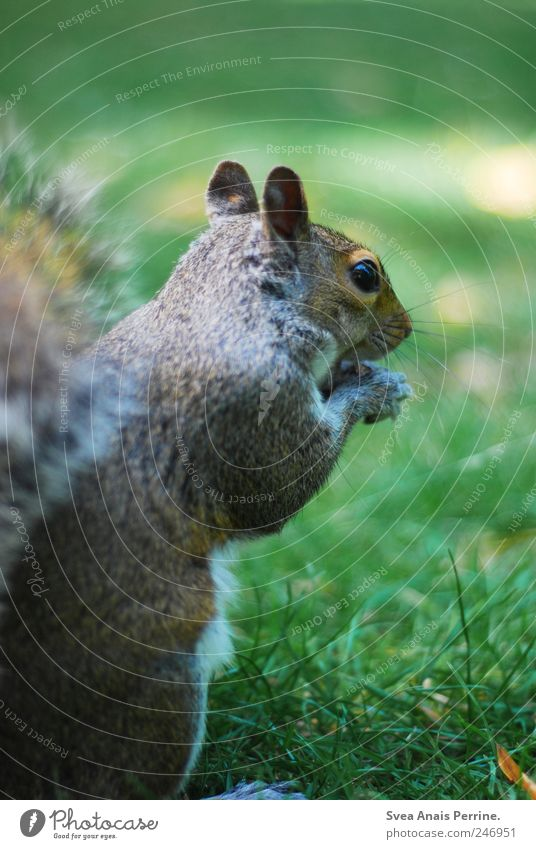Meadow Park Wild animal Lawn Exceptional Animal face Pelt Squirrel