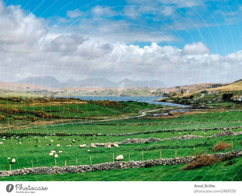 Ireland - Sky Road Vacation & Travel Tourism Trip Far-off places Sightseeing Summer Summer vacation Nature Landscape Clouds Spring Beautiful weather Meadow