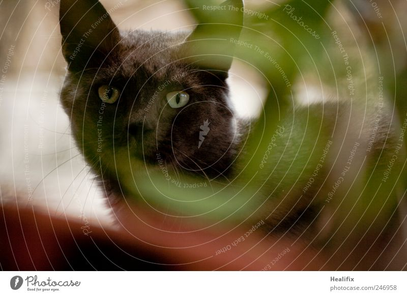 Cat Nature Plant Green Calm Animal Black Garden Freedom Park Elegant Free Observe Protection Curiosity Safety