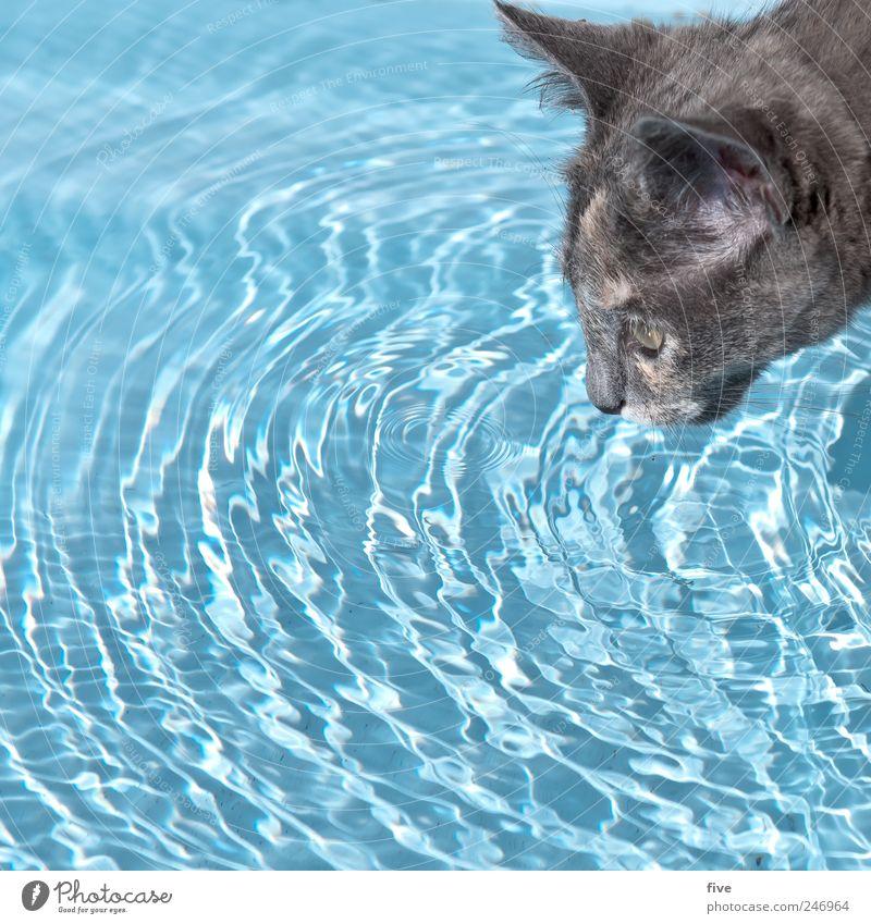 Water Blue Animal Cat Drops of water Swimming & Bathing Drinking Observe Pelt Pet