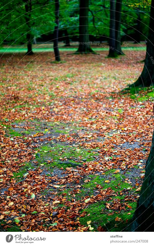 Tree Beautiful Leaf Calm Forest Autumn Landscape Park Fatigue Moss Beech tree Beech wood