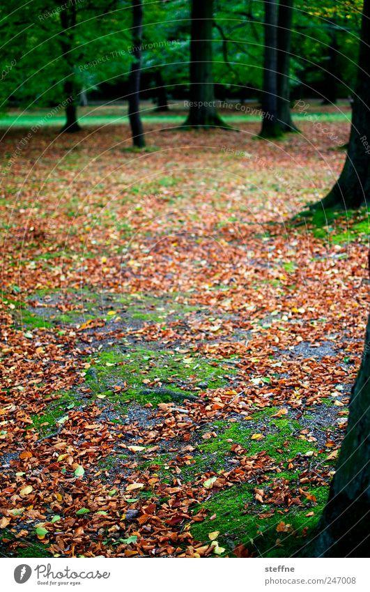 Tree Beautiful Leaf Calm Forest Autumn Landscape Park Fatigue Moss Beech tree Beech wood