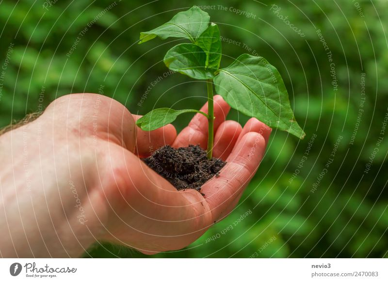 Nature Plant Green Leaf Environment Spring Natural Garden Field Earth Growth Elements Ecological Spring fever Agricultural crop Foliage plant