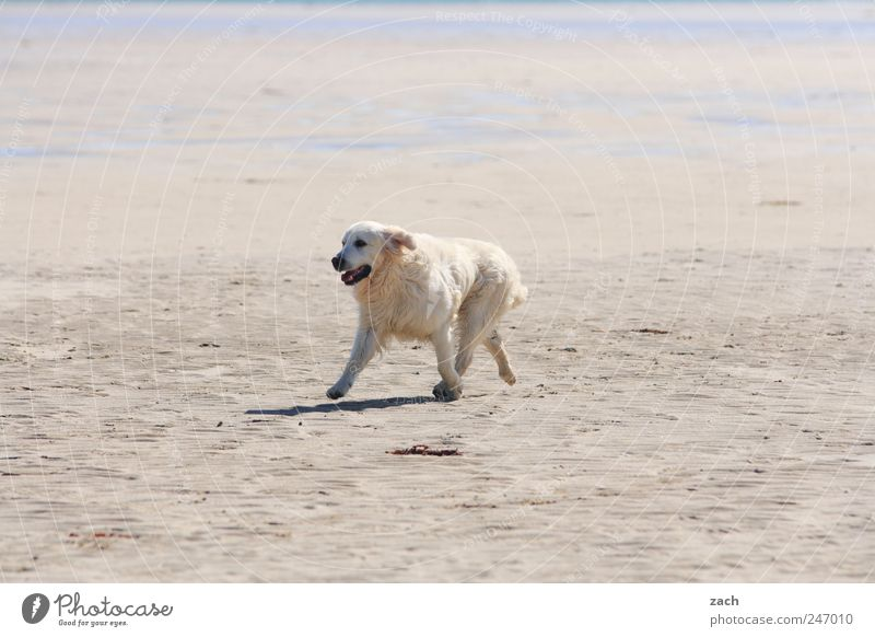 Nature White Beach Animal Movement Dog Sand Coast Walking Wild Pelt Pet