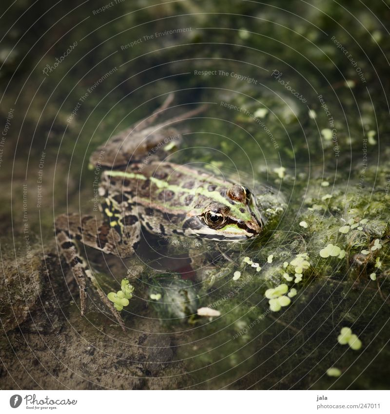 frog Nature Animal Water Plant Aquatic plant River Wild animal Frog 1 Natural Brown Green Colour photo Exterior shot Deserted Day Animal portrait Forward
