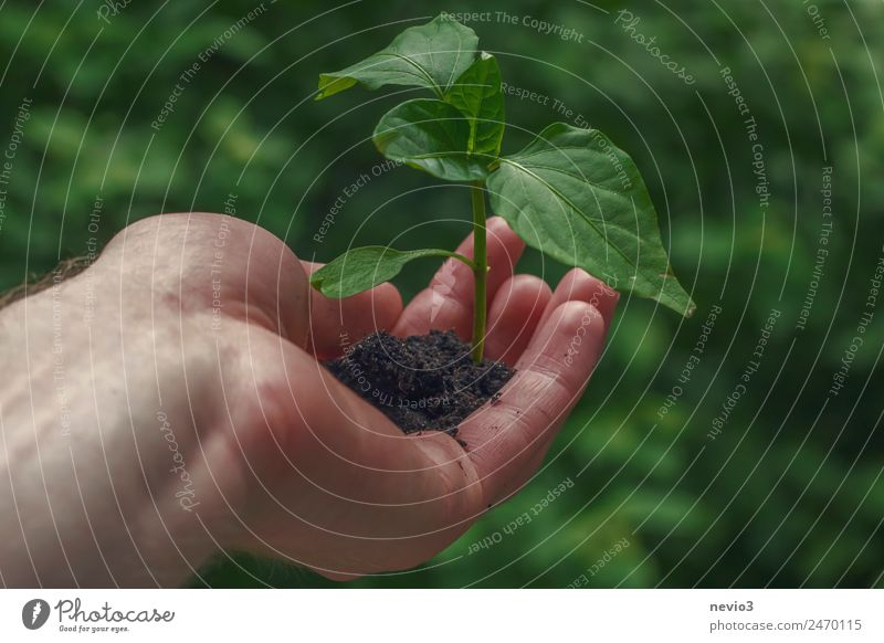 Hand with young plant Environment Plant Foliage plant Agricultural crop Pot plant Garden Park Forest Virgin forest Green Part of the plant Plantlet Extend
