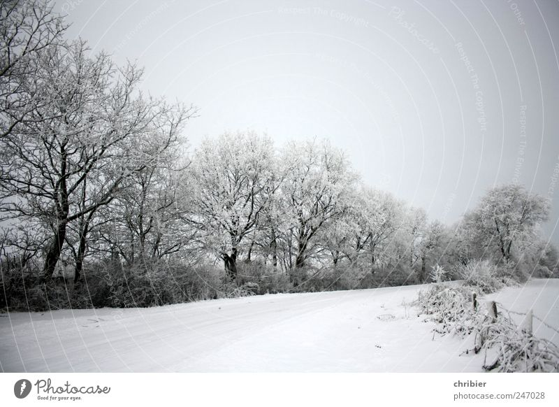 Snow silence Nature Landscape Plant Sky Cloudless sky Winter Ice Frost Tree Bushes Bend Field Fence Lanes & trails Freeze Glittering Bright Cold Clean Gray