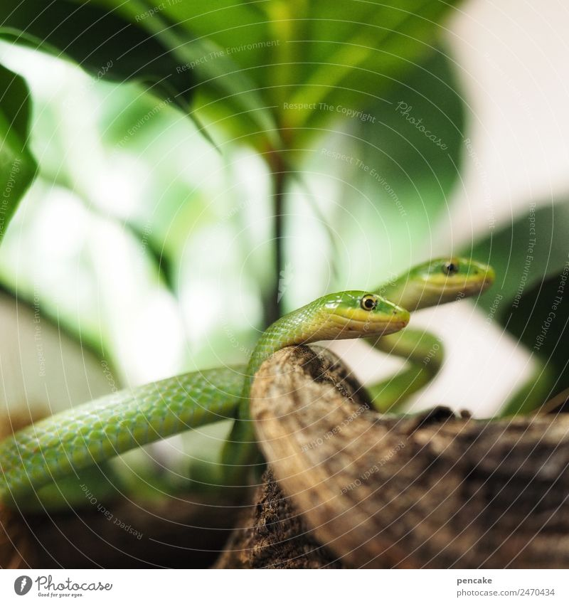 Way of life | reptiles Plant Animal Wild animal Snake 2 Observe Green Reptiles Terrarium Poison Fear Tree of knowledge Colour photo Interior shot Close-up