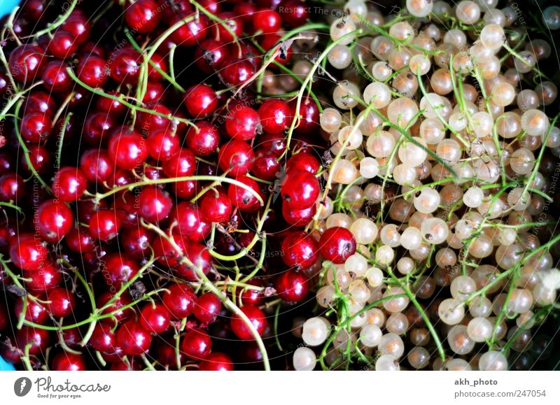 White Red Healthy Fruit Food Nutrition Sweet Healthy Eating Organic produce Converse Juicy Redcurrant Picked Garden fruit