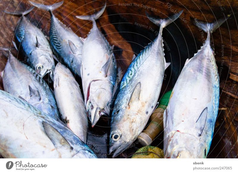 Ocean Animal Food Fresh Nutrition Group of animals Fish Catch Delicious Aquarium Sushi Africa Close-up Dead animal Madagascar