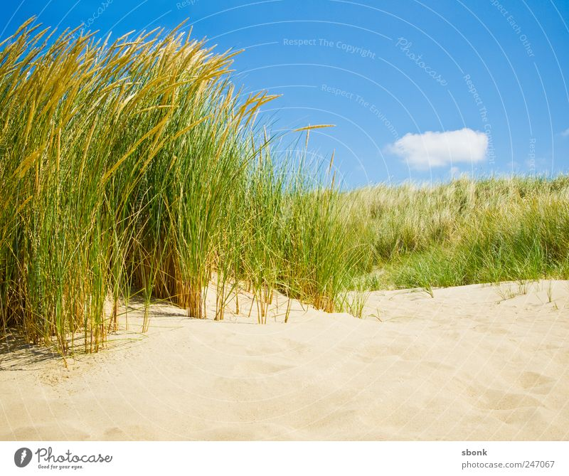 Sky Blue Summer Vacation & Travel Beach Ocean Grass Sand Warmth Coast Air Bushes Travel photography North Sea Dune Netherlands