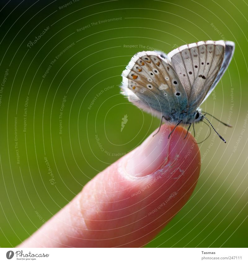 The Papillon Human being Skin Fingers Butterfly Wing 1 Animal To enjoy Hang Crouch Thin Beautiful Colour photo Exterior shot Detail Macro (Extreme close-up)