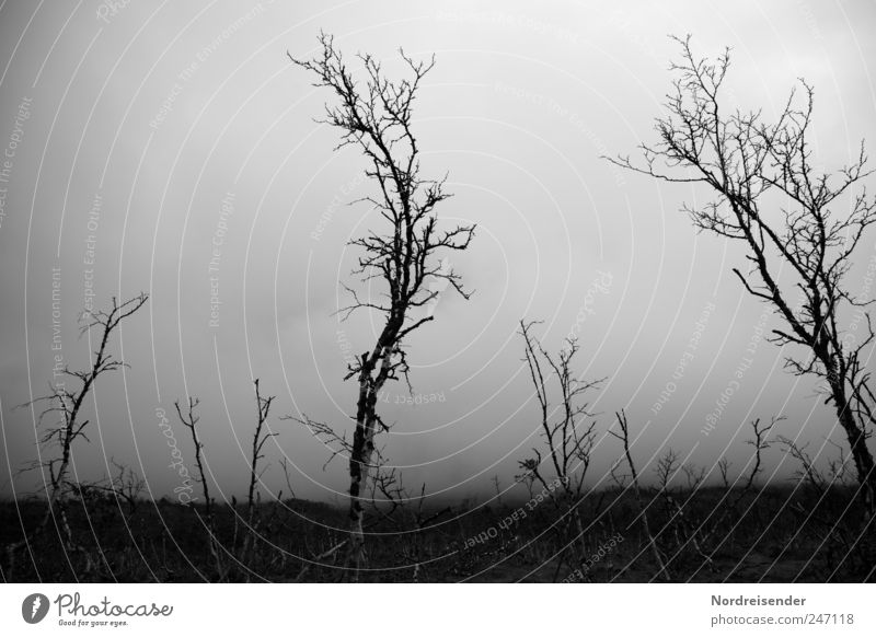 Nature Plant Loneliness Forest Environment Landscape Dark Death Cold Weather Climate Fog Stand Gloomy Threat End