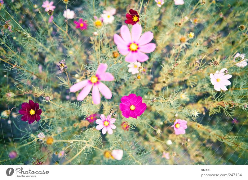 I eat flowers ... Summer Nature Plant Spring Flower Blossom Blossoming Growth Friendliness Tall Beautiful Natural Many Green Pink Flower field Fragrance